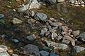 Flussbett der Hilll 2.jpg