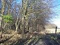 Footpath beside Fullingpits Wood - geograph.org.uk - 1137033.jpg