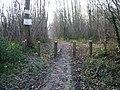 Footpath through Oxenden Wood - geograph.org.uk - 1103132.jpg