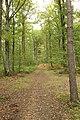 Forêt Départementale de Méridon à Chevreuse le 29 septembre 2017 - 09.jpg