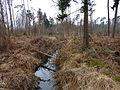 Forêt de Haguenau fin mars.jpg