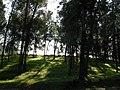 Forest near safed - panoramio.jpg