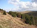 Forestry land - geograph.org.uk - 781762.jpg