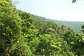 Forests on Simhachalam Hills 1.JPG
