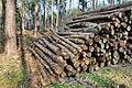 Forstwirtschaft im Forst Rundshorn IMG 5000.jpg