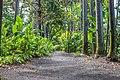 Foster Garden Path 2.jpg