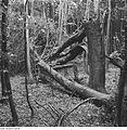 Fotothek df ps 0001836 Bäume.jpg