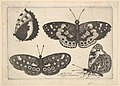 Four butterflies MET DP823958.jpg