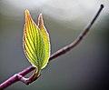 Fresh Leaves.jpg