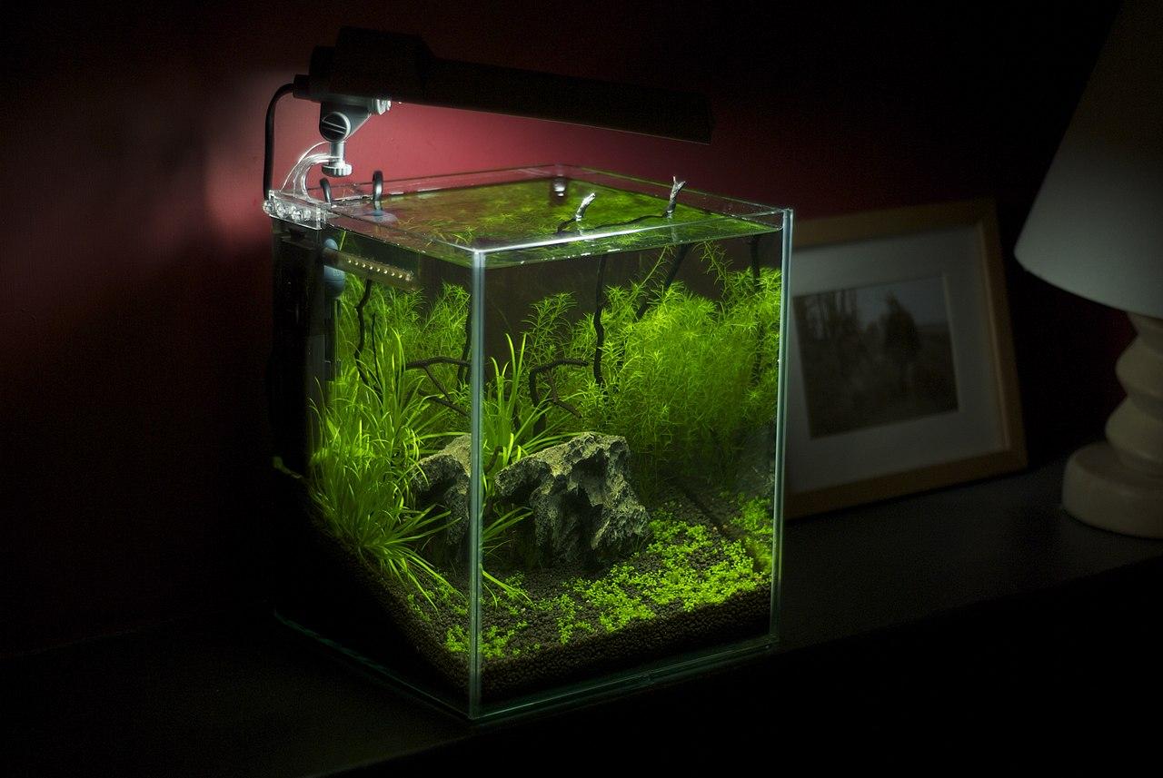 File Freshwater Nano Aquarium Jpg Wikimedia Commons
