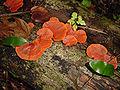 Fungi Belize.jpg