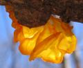 Fungus closeup - brilliant orange.jpg