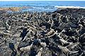 Galápagos Inseln, Ecuador (13898865726).jpg