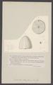 Galerites albogalerus - - Print - Iconographia Zoologica - Special Collections University of Amsterdam - UBAINV0274 007 02 0030.tif