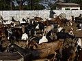 GambiaSerrekundaBrikama022 (12030016996).jpg