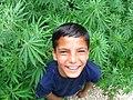 Ganja in Himachal Pradesh (2847415795).jpg