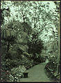 Garden in Madeira, by Sarah Angelina Acland, c.1910 (8).jpg