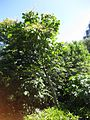 Gardenology.org-IMG 0453 rbgs10dec.jpg