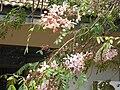 Gardenology.org-IMG 7419 qsbg11mar.jpg