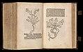 Gart der gesuntheit - Ortus sanitatis (Herbarius) MET DP358437.jpg