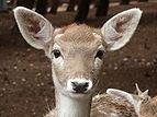 Gaziantep Zoo 1260109 cr.jpg