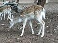 Gaziantep Zoo 1260133.jpg