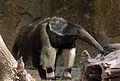 Gfp-giant-anteater.jpg