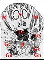 Glandes gnathocoxales de Leptyphantes 2.jpg