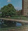 Glogow, 1980 (staw, pond).jpg
