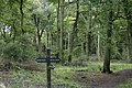 Goodmerhill Wood south-east of Chequers - geograph.org.uk - 1425378.jpg