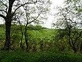 Gort Townland - geograph.org.uk - 1868922.jpg