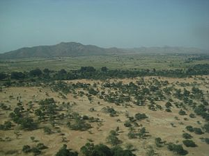 Wildlife of Chad - Vegetation outside Goz Beïda.