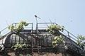Gradina Botanica iunie 2014 IMG 3798 03.JPG