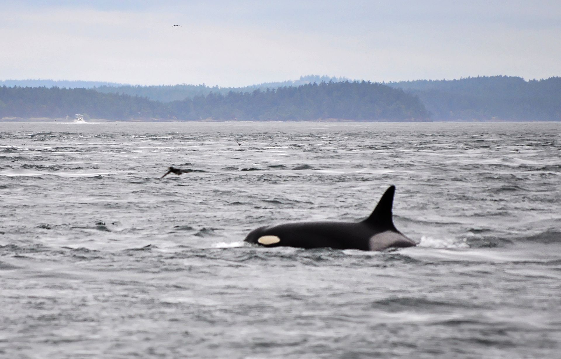 Whales mature age