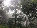 Green Forest Of Kathmandu 02.jpg