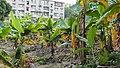 Guangzhou Niushan Wanrenkeng 20171230.165548.jpg