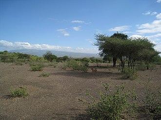 Hadza people - Serengeti hunting grounds in Hadzaland.