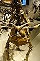 Hagryphus giganteus chest detail salt lake city.jpg