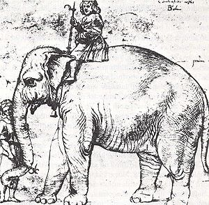 Hanno (elephant) - Sketch of Hanno and mahout, after Raphael, c.1514.