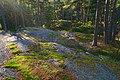 Hannusmetsä Espoo 311017 b.jpg