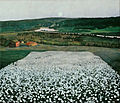 Harald Sohlberg - Flower Meadow in the North - Google Art Project.jpg
