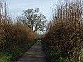 Harleyford Lane - geograph.org.uk - 292792.jpg