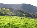 Harmony Grove - panoramio.jpg