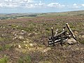 Hartleyburn Common - geograph.org.uk - 214606.jpg