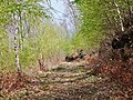 Hiking trail - panoramio (2).jpg