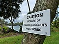 Hilo falling coconut warning sign.jpg