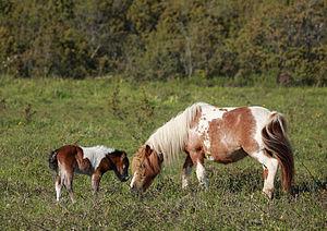 Hobused Matsalu rahvuspargis