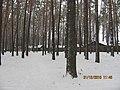 Honcharivs'ke, Chernihivs'ka oblast, Ukraine, 15558 - panoramio (5).jpg
