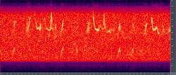 Espectograma del canto de una ballena yubarta,— Escuchar (Formato OGG, 57 kB)