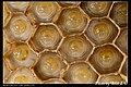 Hymenoptera (6022583370).jpg
